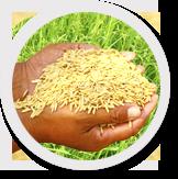Food & Public Distribution